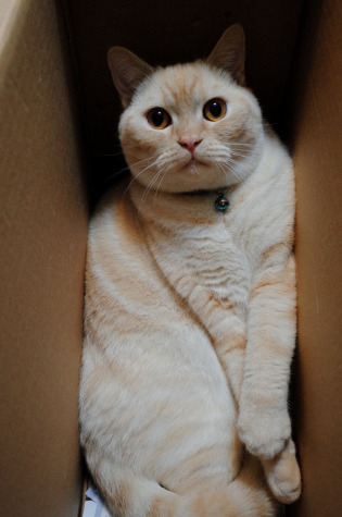 Another cat in a box