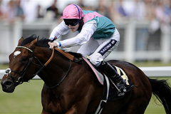 Frankel Champion Stakes